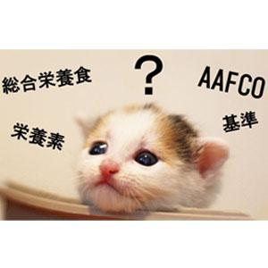 総合栄養食について考える猫の画像