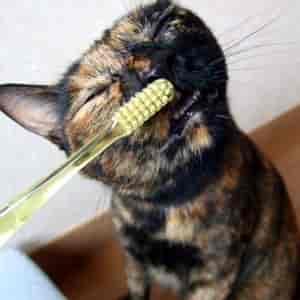 猫が歯磨きする画像