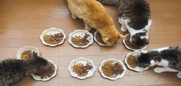キャットフードを食べる猫たちの画像