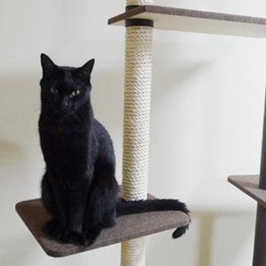 キャットタワーに登る黒猫の画像