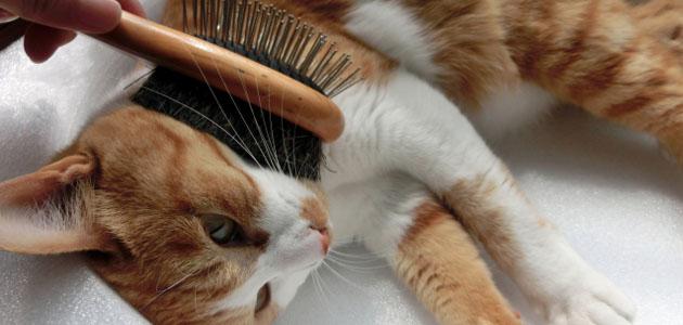 ブラッシングをする猫