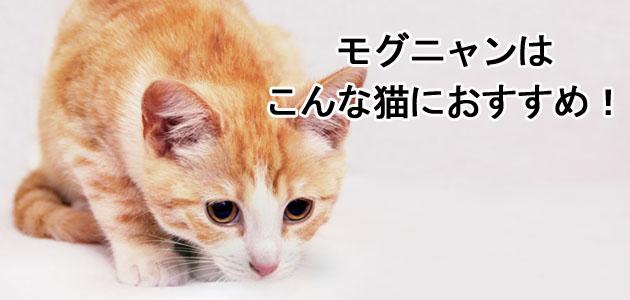 モグニャンはこんな猫におすすめ